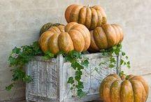 Autumnal / by Jen Paulis