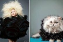"Animal-Celebrity Doppelgängers / Photographer Amy Davis' series ""Anthropomorphism"" improves celebrity portraits by replacing Justin Timberlake, Harrison Ford and Katy Perry with their dogglegangers and dupli-cats. 