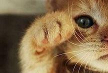 »÷ adorable ÷«