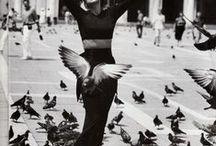 Flutter, my winged friends......... / by Marlene Christophers
