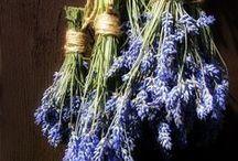 »÷ FLORA lavender ÷«