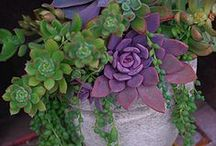 my green thumb / Gardening ideas and design. / by INSPIRE BY ALIX