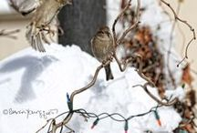 Sparrows in my Urban (NYC) Garden & the Trees Surrounding It