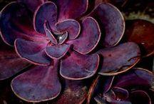 »÷ COLOR purple ÷«