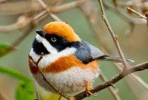 Love this Birds