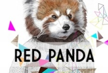 Red Panda / by YourDailyIntake.com