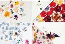 Pikolab & Lokokon / Card designs created together by the Pikolab and Lokokon founders. All the compositions were made with home raised and self dried flowers that were photographied and edited to create a this 10  botanical postcards collection.  More information:  pikokon.tumblr.com / by Virginia Polo