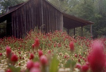 Old Barns / by Mildred Snider