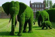 Green goodness / Gardening, plants and flowers / by Ingunn Gauperaa Lund