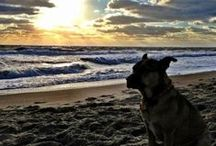 Dogs of The Outer Banks / The Outer Banks are proud to be one of the most pet-friendly vacation spots in America. Pin your pics with the hashtag #DogsofOBX for a repin!