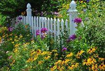 garden / by Tanya Richardson