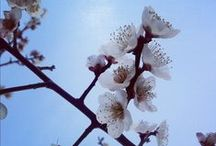 Japan DAYZ / moments I feel Japan