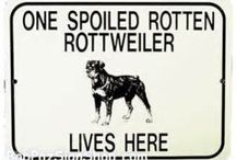 Spoiled Rotten Rottweiler / All things to do with my rottie and caring for her.  / by Kourtney Saxton