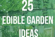 Edible gardening / Why not start an edible garden? And use what you grow in some healthy homemade dishes!