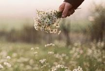 Scotland Inspiration / Inspiration for our road trip to Scotland. This includes The Isle of Skye, Loch Ness, Edinburgh Castle, Angus Coast, UK road trip, England, Glasgow, and much more.