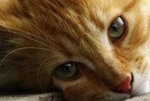 I ♥ animals / Animals photos / by Pampas