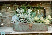 wedding flowers/ Party flowers ideas / by Jamie Obrien