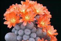 Cactus & Suculentas & Bonsai / by Eda Campos
