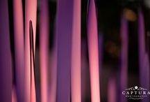 Dale Chihuly at Denver Botanic Gardens / Dale Chihuly installations at the Denver Botanic Gardens