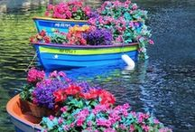 ❀ ✿ Floral ❁ ✾
