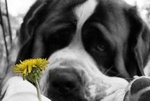 Just Too Cute!! / by Rhoda Cook