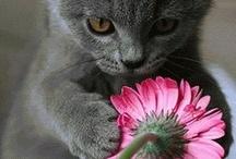**Fab Flowers** / by Rhoda Cook
