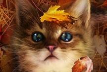Autumn  :0) / by Rhoda Cook