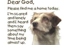 Animals in need of furver homes. / Animals looking for their furever home. Adopt don't shop. Anyone is welcome to pin to this board. To be added simply leave me a comment! / by Susan McDaniel