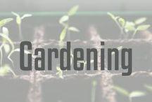 Gardening / Ideas and inspiration for gardening.