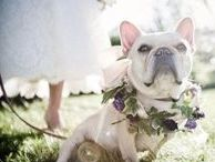 Wedding Pets / Cute and creative ways to incorporate your pet into your wedding day.
