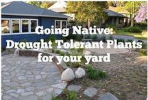 California Drought / What can one do in the midst of a drought? How do we water? What plants do we need to plant?