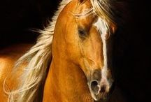 Everything Horsey / Horses, Equine. Pure Beauty