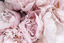 Bloom / Flowers, floral arrangements, bouquets, blooms, peonies, roses, flower bunches