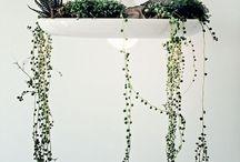 Succulents & Cacti love