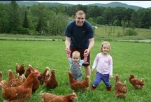 "Pete & Gerry's Organic Eggs-""Happy chickens lay better eggs!"" / by Pete & Gerry's Organic Eggs"