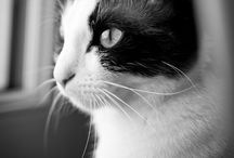 Cats / Cats are for me the most wonderful little pets in the world, I share my love !