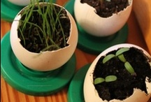 Earth Day / by Pete & Gerry's Organic Eggs