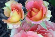 Beauty of Flowers / Colorful flowers of all kinds / by Marilyn Gerhard