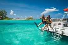 Scuba Diving / Get active and explore the best locations for scuba diving across the globe. / by OneWorld365 Travel