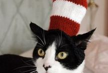 Cat in a Hat / Cats in hats / by Lillian (Lil) Templeman