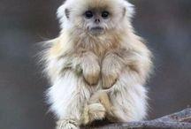 monkeys / Humans closest relitives.