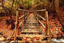 autumn. / by Cristina Kawecki