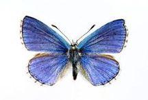 Butterflies / by Lori Fortini
