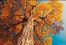 ahhh autumn / by Cara M
