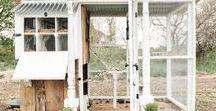 Farmhouse Garden Ideas