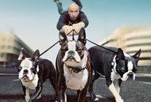 Boston Terriers / Boston Terriers / by Destiny Bones