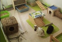 •Rabbits cage•
