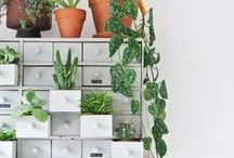 Urban Jungle Inspired / Have you read the book yet?  I've fallen madly in love with the idea of plants in every room of the house.