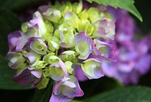 Fiori piante & C.....
