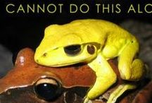Environmental Poster Design / Frogs Are Green's founder Susan Newman, branding designer and environmentalist creates Earth Day and Environmental posters to help spread the awareness that healthy frogs equal a healthy planet for us all. All posters are printed on FSC certified paper and proceeds from the sales go toward nature and environmental organizations.